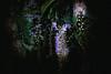 L1260505 night fireworks (Rise Liao) Tags: 明亮 花 植物 微距