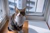 _NCL4900-Edit (chitoroid) Tags: nikond750 afsnikkor2470mmf28ged japan hokkaido sapporo cat