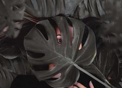 """natural drowning"" // ""Ahogo natural"" (Kathy Chareun) Tags: art arte fineart ps photoshop lr lightroom woman mujer leaf hoja girl chica tropical grey gris black negro eye ojo hair pelo drowning ahogo natural autoretrato selfportrait portrait retrato death muerte pain dolor"
