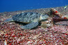 Turtle 30 (Petter Thorden) Tags: diving indonesia gili trawangan underwater turtle