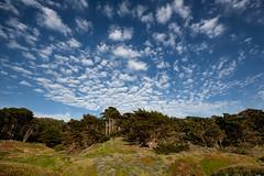 Coastal trees (Mark Heine Photos) Tags: trees sanfrancisco coastal california bakerbeach markheine shore coast pine pacificocean