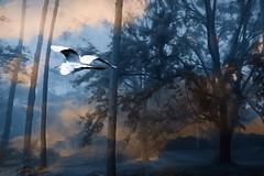 Dream's Embrace (Karen Kleis) Tags: visualpoem egret bird dream trees awardtree artdigital