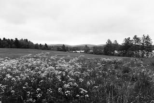 Wildflowers - Edith Wharton Park