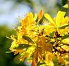 You are my Sunshine (barbara_donders) Tags: natuur nature spring lente magical beautifull mooi prachtig flowers bloemen tree boom bokeh macro yellow geel zonlicht