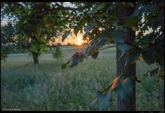 Tree in Sunset (Sascha Renzo) Tags: tree trees sun sunny sunrise sunset light lights nolight atmosphere weather landscape summer good fotografie foto photography photo landschaft sony