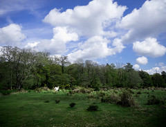 fl--03741.jpg (kenichiro_jpn) Tags: ロンドン ニューフォレスト pony animal forest sky blue horse newforest uk