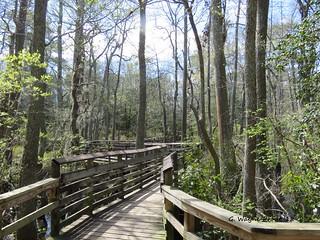 Bald Cypress Trail Boardwalk