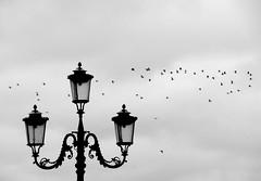 Venice Winter* (pjarc) Tags: europe europa italy italia veneto venetian venice venezia inverno winter 2018 febbraio february lampione street lamp uccelli birds volo fly composition composizione cielo sky nuvole clouds foto photo digital bw black white biancoenero nikon dx d200 allaperto