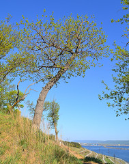 Hiding from the coldness (МирославСтаменов) Tags: russia togliatti volga cliff coast slope edge forest oakery oak quercus tree crown sprouting branch