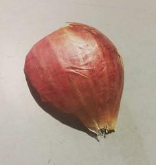 Onion Skin (zohaibusmann) Tags: onion onionskin onionshell vegetables loveofvegetables fruitsandvegetables vegetablestexture herbsandvegetables vegetableslovers onionmacro onions macros macroandcloseup macroshot macroimage zohaibusmanphotography lgg3 ngc