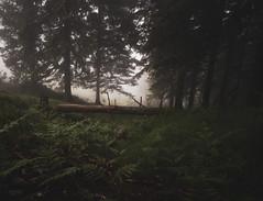 Oianleku (begonafmd) Tags: oianleku bosques nieblas euskadibasquecountry euslkerria naturaleza forest tree
