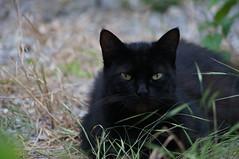DSC01856 (jodespe) Tags: a580 cat nature