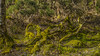 Mossy Logs (prajpix) Tags: woods woodland scrub logs deadwood decay recycling moss lichen nature invernesshire highlands scotland green