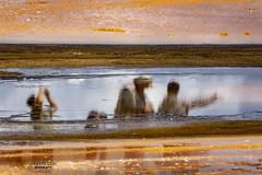 *** (mariola aga) Tags: yellowstone yellowstonenationalpark people tourists reflection bacterialmat closeup upsidedown art fantasticnature thegalaxy
