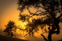 Sunset Silhouette (JDWCurtis) Tags: sun sunset goldenhour gold golden silhouette branch branches tree water sea ocean bodyofwater waterfront wales southwales thegower gower cymru land dreamscape dream heaven
