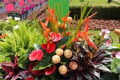 Maig_5195 (Joanbrebo) Tags: girona catalunya españa es tempsdeflors tempsdeflors2018 canoneos80d eosd efs1018mmf4556isstm autofocus flors flores flowers fiori fleur blumen blossom