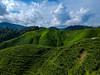 malaysia-0092 (ericvdb) Tags: cameronhighlands highlands teaplantation plantation malaysia