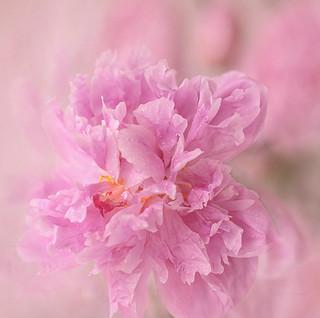 Dance in pink dress.