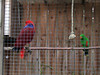 Parrots - Tropical Butterfly House Wildlife And Falconry Centre 2018 (Dave_Johnson) Tags: tropicalbutterflyhousewildlifeandfalconrycentre tropicalbutterflyhouse wildlifepark park centre butterflyhouse anston northanston sheffield southyorkshire animal animals parrot parrots bird birds