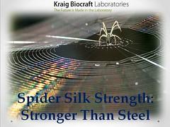 Spider Silk Strength Stronger Than Steel (alicedavid984) Tags: spider silk
