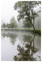 Arrow Tree (P_Hibon) Tags: belgie dender denderstreek pollare bomen bos mist ochtend water belgium landscape landschap morning