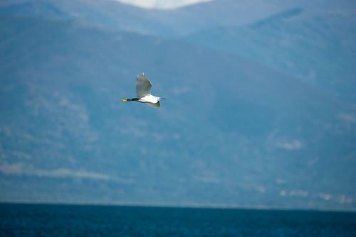 Flight ©  Andrey