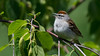 Sing me a song! (fmzip) Tags: birds yellow finch swallow songbird dove robin