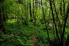 Secret path! (Ross Burton) Tags: cardinham isla src:filename=dscf1434