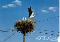 Postcrossing PT-569400 (booboo_babies) Tags: nest bird birds portugal sky bluesky postcrossing storks