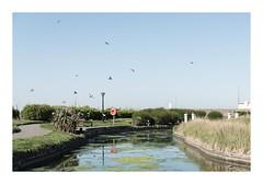 Waterways (Number Johnny 5) Tags: tamron d750 nikon water birds space empty orange mundane documentary blue desolate imanoot banal relections ordinary waterways deserted green johnpettigrew 2470mm documenting seaside