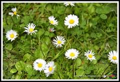 Snipe Dales 09.06.18 (22) (nowboy8) Tags: nikon nikond7200 redhill snipedales lincolnshirewildlifetrust lincolnshire wildlife walk trees