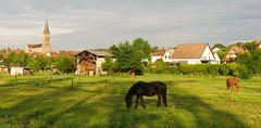 A l'ombre du clocher (blogspfastatt (+4.000.000 views)) Tags: zillisheim blogspfastatt eglise church paysage landscape nature alsace horse animal cheval