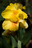 malaysia-6732 (ericvdb) Tags: flower cameronhighlands highlands teaplantation plantation malaysia