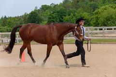 JBC_4895.jpg (Jim Babbage) Tags: krahc horseshow appaloosa horses 2018