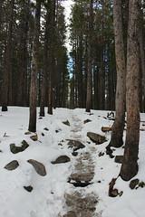 Trodden (ABeamOfLight) Tags: forest tree wood woods trees pathway hike snow snowy landscape rockymountainnationalpark colorado travel cold beginnerdigitalphotographychallengewinner canon