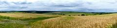 Landschaft zwischen Heckfeld und Oberlauda