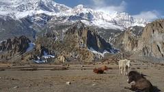 20180326_084549-01 (World Wild Tour - 500 days around the world) Tags: annapurna world wild tour worldwildtour snow pokhara kathmandu trekking himalaya everest landscape sunset sunrise montain