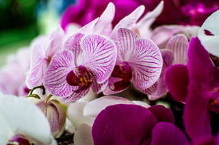 Flower Veins (154/365)