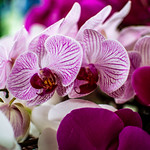 Flower Veins (154/365) thumbnail