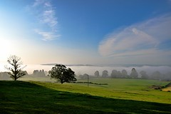 Early morning mist Penrith, Cumbria, England (vincocamm) Tags: mist misty sky clouds cloudy tree green blue eden valley nikon d5500 morning spring sunny