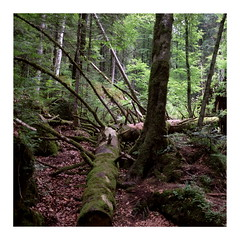 Forest (ngbrx) Tags: blausee berneseoberland switzerland kandertal kandersteg bern berne bernese berner oberland schweiz suisse svizzera trees bäume forest wald trunk stamm