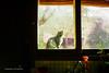 Un gato. (Fran Tambasco) Tags: interior exterior cat gato animal windows mascota cats catz