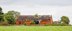 Nettle hill Circular Walk 17th June 2018 (boddle (Steve Hart)) Tags: stevestevenhartcoventryunitedkingdomcanon5d4 nettle hill circular walk 17th june 2018 steve hart boddle steven bruce wyke road wyken coventry united kingdon england great britain canon 5d mk4 6d 100400mm is usm ii 2470mm standard wild wilds wildlife life nature natural bird birds flowers flower fungii fungus insect insects spiders butterfly moth butterflies moths creepy crawley winter spring summer autumn seasons sunset weather sun sky cloud clouds panoramic landscape withybrook unitedkingdom gb