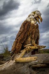 Driftwood Eagle (Paul Rioux) Tags: art driftwood shells eagle beach clouds prioux