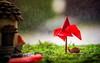 ready for a bit of rain (auntneecey) Tags: rain snail red umbrella 365the2018edition 3652018 day147365 27may18 hss sliderssunday