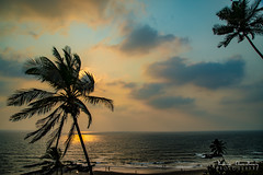 Ocean Breeze. Sunset. Shimmering waters. (Java Cafe) Tags: goa india outdoor seascape beach sunset sky skyporn clouds palmtree coconutpalm idyllic tranquil silhouette breeze reflection serene nature landscape surf sand coast arabian sea