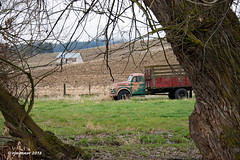 Farm Laborer_187358 (rjmonner) Tags: truck rural country relic work working workingrelic dodge shed field farming agriculture agricultural agronomy agronomic fence pasture idaho northwest auto antique useful used automotive