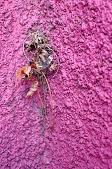 Pink and plant. (ianmiller6771) Tags: abstract pink plant wall paint colour fuji pebbledash weed contrast tenacity