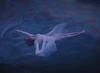 Retrospect (Deltalex.) Tags: girl woman pool water ocean clouds sky sunset moon conceptual portrait conceptualportrait fineartphotography surrealism surreal surrealportrait deltalex alexbenetel nikond600 goodbye floating selfportrait