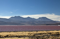 Laguna Colorada (Joost10000) Tags: laguna colorada lagunacolorada bolivia eduardo avaroa eduardoavaroa andes altiplano highlands outdoors wild wilderness red mountains scenic beauty southamerica canon eos canon5d grass water lake nature natur landscape landschaft